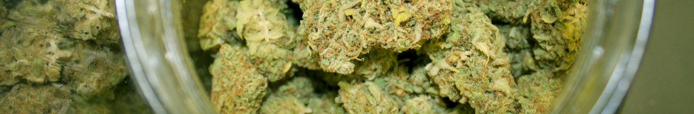 Cannabis Flower Information